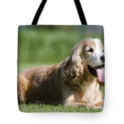 Dog Lying Down On The Green Grass Tote Bag