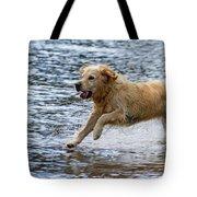 Dog Running On Shallow Lake Shore Tote Bag