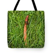 Dog Stinkhorn Mushroom - Mutinus Caninus Tote Bag