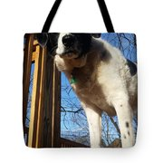 Doggone Cute  Tote Bag