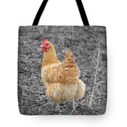 Domestic Feathered Beauty Tote Bag