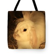 Domesticated Rabbit Tote Bag