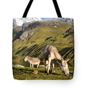 Donkeys Grazing In The Mountains Tote Bag
