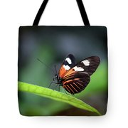 Doris Longwing Butterfly 2017 Tote Bag