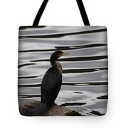 Double-crested Cormorant 20121101_128 Tote Bag