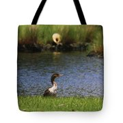Double-crested Cormorant 3 Tote Bag