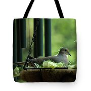 Dove Nesting, Balcony Garden, Hunter Hill, Hagerstown, Maryland, Tote Bag
