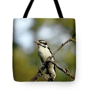 Downy Woodpecker In Fall Tote Bag