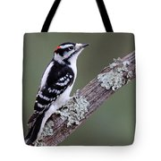 Perching Downy Woodpecker Tote Bag