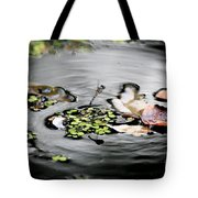 Dragonfly Above Leaves Tote Bag