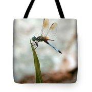Dragonfly At Cypress Gardens Tote Bag