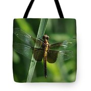 Dragonfly At Rest Tote Bag