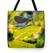 Dragonfly Dragonfly  Tote Bag