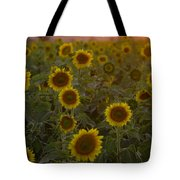 Dreaming In Sunflowers Tote Bag