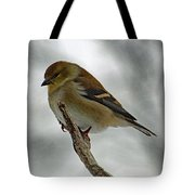 Dreaming Of Spring - American Goldfinch Tote Bag