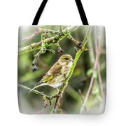 Dreamy Greenfinch. Tote Bag