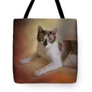 Dreamy Snowshoe Cat Tote Bag