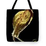 Dried Flowers With  The Slender Legs. Tote Bag