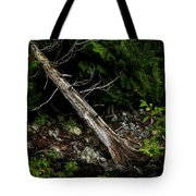 Drifted Tree Tote Bag