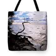 Driftwood Dragon-barnegat Bay Tote Bag