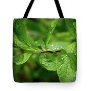 Droplets On Spring Leaves Tote Bag