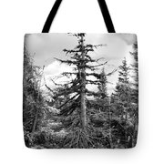Dry Spruce Tote Bag