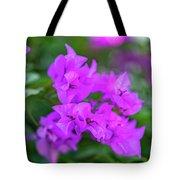 Dsc_1514 Web Tote Bag