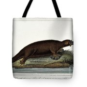 Duck-billed Platypus Ornithorhynchus Tote Bag