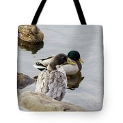 Duck, Duck Tote Bag