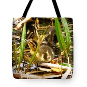 Ducklings 1 Tote Bag