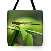 Duckweed Firetail Damselfly Tote Bag