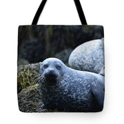Dunvegan Loch With A Group Of Harbor Seals Tote Bag
