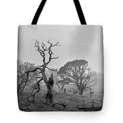 Dusk, Crannoch Woods Tote Bag