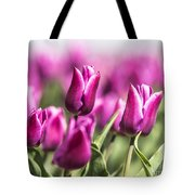 Dutch Tulips 2016 - Part One Tote Bag