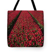 Dutch Tulips Second Shoot Of 2015 Part 1 Tote Bag