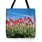 Dutch Tulips Second Shoot Of 2015 Part 10 Tote Bag