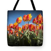 Dutch Tulips Second Shoot Of 2015 Part 2 Tote Bag
