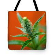 Eager For Orange Tote Bag