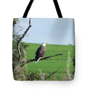 Bald Eagle Overlook Tote Bag