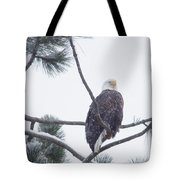 Eagle In A Pine Tree Tote Bag