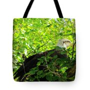 Eagle In The Tree Tote Bag