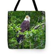Eagle In Tree Tote Bag