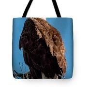 Eagle Of The Salt River Tote Bag