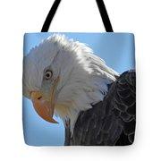 Eagle Stare Tote Bag