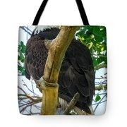 Eagles Of The Salt River Tote Bag