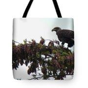 Eaglet In Pines Tote Bag