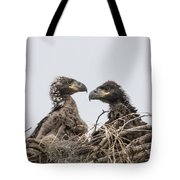 Eaglets Having A Chat Tote Bag