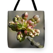 Early Cherry Blossom Tote Bag