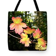 Early Days Of Autumn Tote Bag