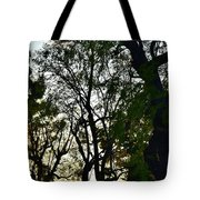 Early Evening Sunset Through The Trees Tote Bag